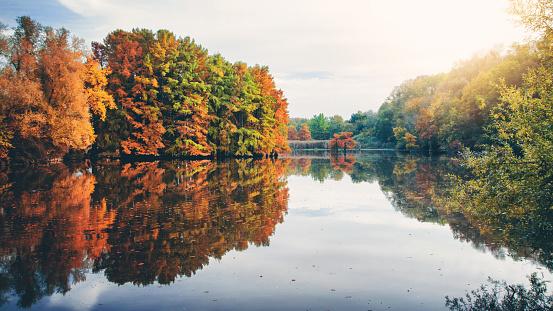 紅葉「池に沿って秋のフランスで夕方の日光と水に光が反射して美しいサイプレス ツリーの葉」:スマホ壁紙(14)