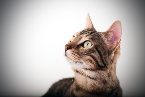 Kitten「美しい猫」:スマホ壁紙(4)