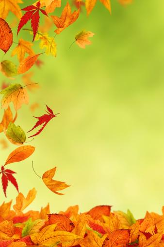 紅葉「美しい色彩とともに秋」:スマホ壁紙(7)