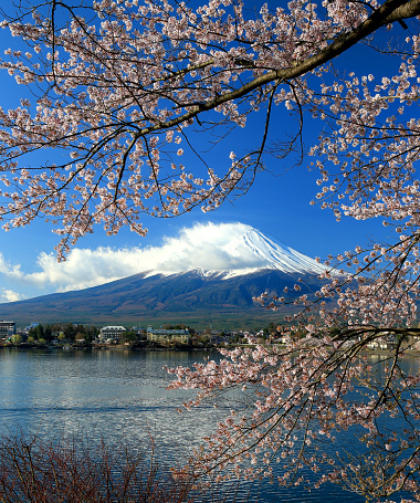 桜「Beautiful cherry blossoms with Mount Fuji, japan」:スマホ壁紙(16)