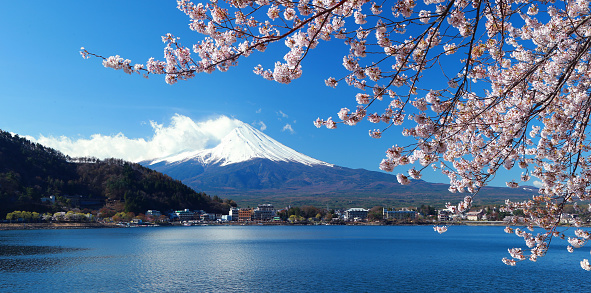 桜「Beautiful cherry blossoms with Mount Fuji, japan」:スマホ壁紙(15)