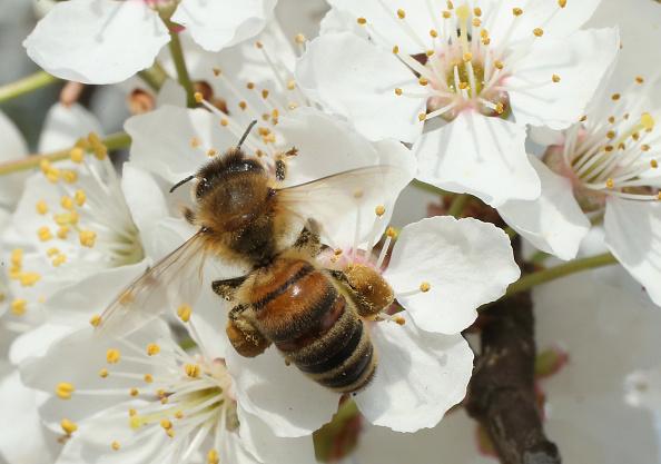 Honey「Beekeepers Report Higher Loss Rates In Bee Populations」:写真・画像(11)[壁紙.com]