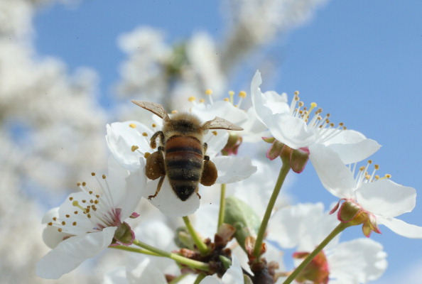 Honey「Beekeepers Report Higher Loss Rates In Bee Populations」:写真・画像(16)[壁紙.com]