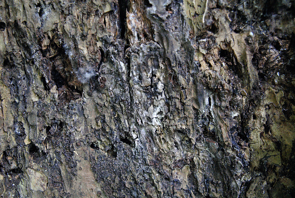 Environmental Conservation「Timber with white rot.」:写真・画像(4)[壁紙.com]