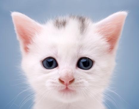 子猫「Wide eyed and innocent kitten」:スマホ壁紙(15)