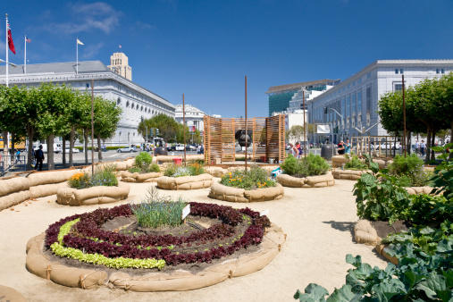 Grove「The Victory Garden, a floral and vegetable garden in the grounds of City Hall in San Francisco, California, United States of America, North America」:スマホ壁紙(13)