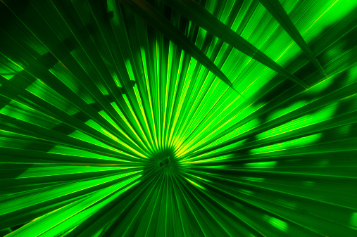 Frond「Mexico, Yucatan, Palm frond」:スマホ壁紙(4)