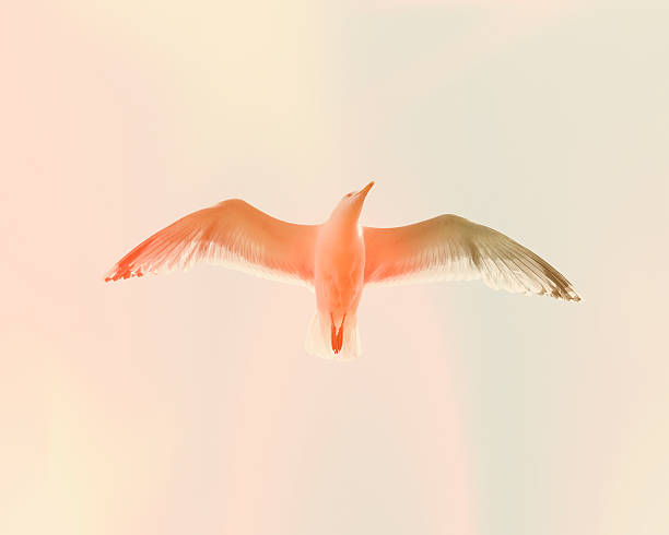 Seagull 5:スマホ壁紙(壁紙.com)