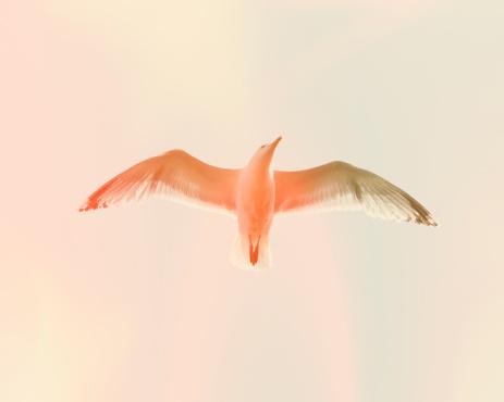 Bird「Seagull 5」:スマホ壁紙(2)