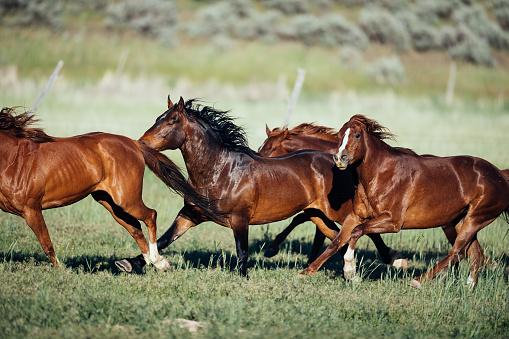 Horse「Stampeding wild horses in USA」:スマホ壁紙(10)