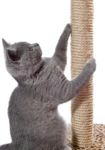 Scratching Post「kitten sharpen claws」:スマホ壁紙(9)
