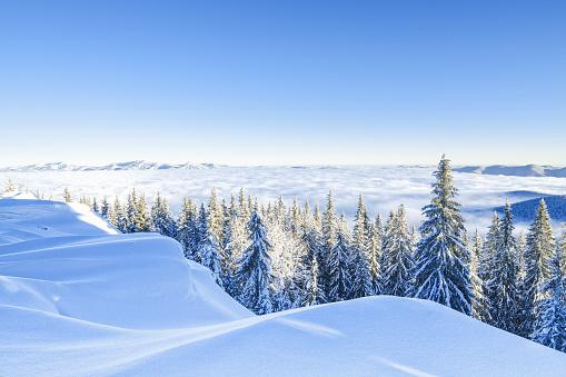 トウヒ「冬の朝」:スマホ壁紙(13)