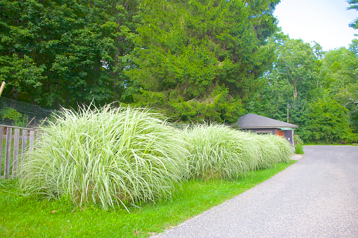 Stylish「Four distinct mounds of tall grasses next to road in the Berkshires」:スマホ壁紙(12)