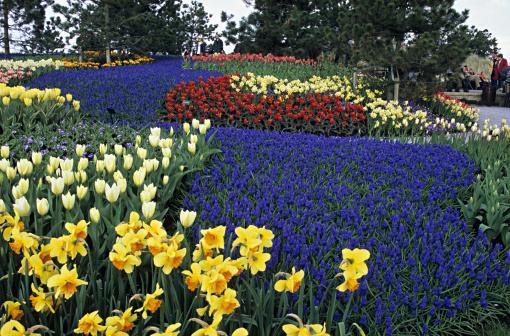 Keukenhof Gardens「Hyacinths and tulips in famous Keukenhof Park, Holland」:スマホ壁紙(13)