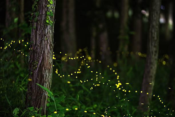 Fireflies in a moonlit forest:スマホ壁紙(壁紙.com)