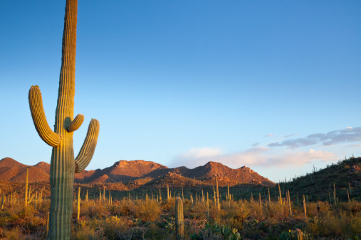 National Monument「Desert landscape filled with cactuses in the sun」:スマホ壁紙(4)