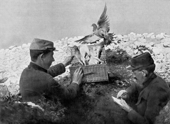 Pigeon「2 soldiers releasing carrier pigeons on front, ww1」:写真・画像(6)[壁紙.com]