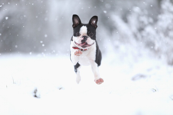 犬「UK Hit By Heavy Snow Fall」:写真・画像(19)[壁紙.com]