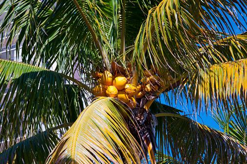 Miami Beach「South Florida_2014」:スマホ壁紙(10)