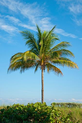 Miami Beach「South Florida_2014」:スマホ壁紙(11)