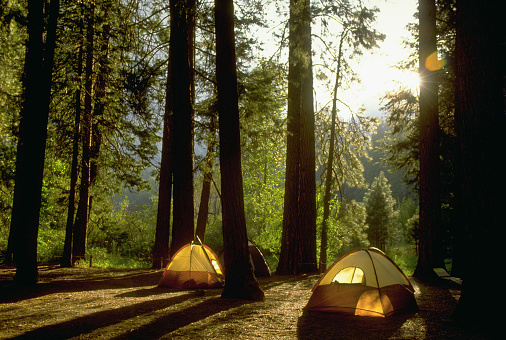 1990-1999「Camping in Yosemite Woods」:スマホ壁紙(12)