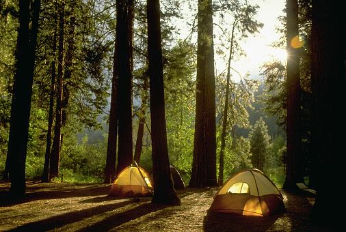 1990-1999「Camping in Yosemite Woods」:スマホ壁紙(16)