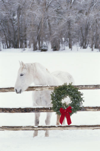 Horse「White Percheron by fence decorated with Christmas wreath, winter」:スマホ壁紙(19)