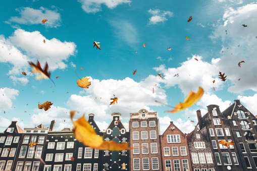 North Holland「Autumn In Amsterdam」:スマホ壁紙(7)