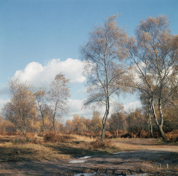 Forest「Autumn」:写真・画像(9)[壁紙.com]