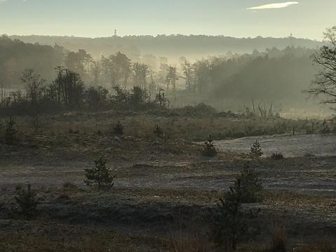 オランダ「神秘的な冬の湿原」:スマホ壁紙(6)
