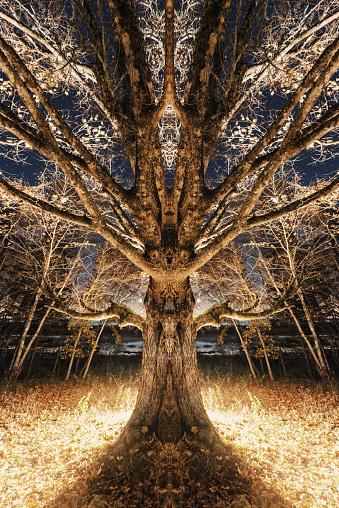 落葉樹「ミラー ・ エルム」:スマホ壁紙(7)