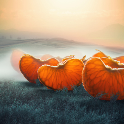 Giant - Fictional Character「surreal giant tangerine segments in foggy field」:スマホ壁紙(18)