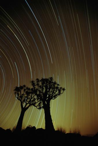 African Aloe「Two quiver trees (Aloe dichotoma) at night (long exposure)」:スマホ壁紙(13)