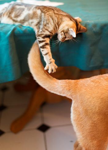 Playing「Kitten Attacking Dogs Tail」:スマホ壁紙(7)