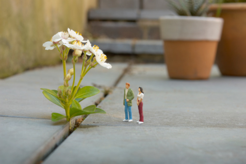 Male Likeness「miniature man and woman looking at flower」:スマホ壁紙(17)
