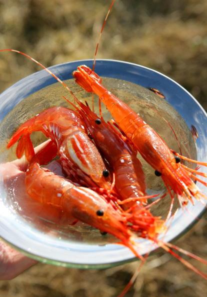 Prawn - Seafood「Sand Blast」:写真・画像(0)[壁紙.com]