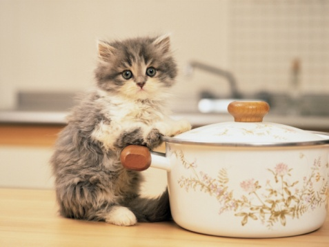 Kitten「Image of a Persian Cat, Holding on to a White-colored Pot, Looking at Camera, Side View, Differential Focus」:スマホ壁紙(15)