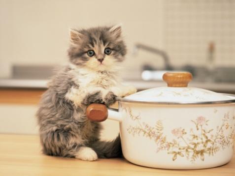 子猫「Image of a Persian Cat, Holding on to a White-colored Pot, Looking at Camera, Side View, Differential Focus」:スマホ壁紙(15)