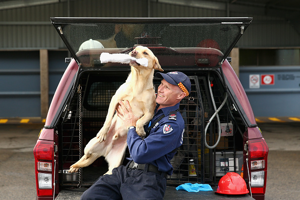 動物「Firefighting Dogs Show Off Their Accelerant Detection Skills」:写真・画像(0)[壁紙.com]