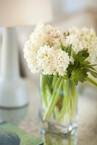 水仙「paper white flowers」:スマホ壁紙(11)