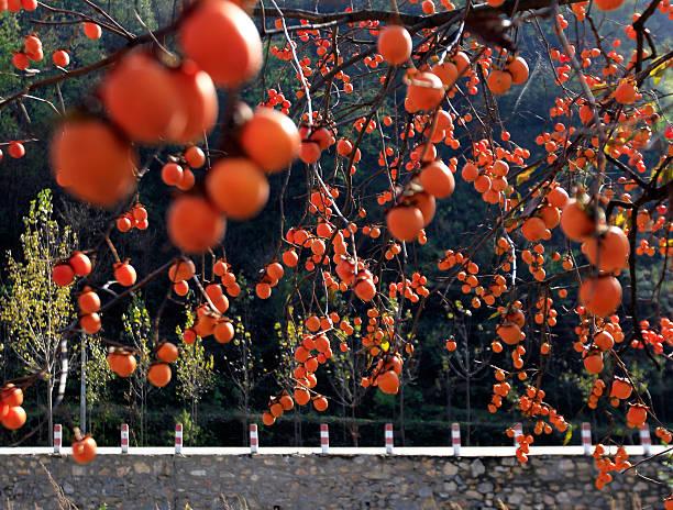 Nature view of persimmon:スマホ壁紙(壁紙.com)
