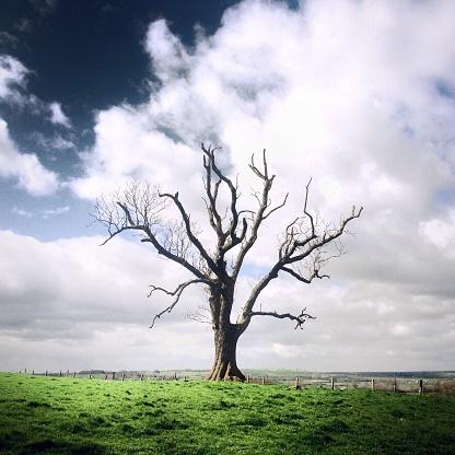 Single Tree「Single bare tree, Staffordshire, UK」:スマホ壁紙(5)