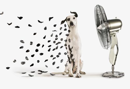 Mottled「Spots flying off Dalmation dog」:スマホ壁紙(12)