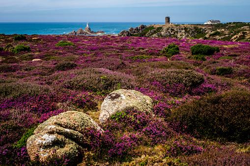 Coastal Feature「Heathland above Corbière Point, Corbière Lighthouse and WWII German Naval Tower MP2, Jersey, Channel Islands」:スマホ壁紙(1)