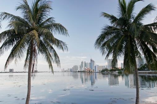 Miami Beach「マイアミのダウンタウン」:スマホ壁紙(9)