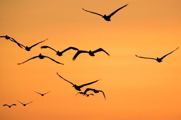 Dawn「Migratory Birds Expected To Bring Avian Flu To West Coast」:写真・画像(7)[壁紙.com]