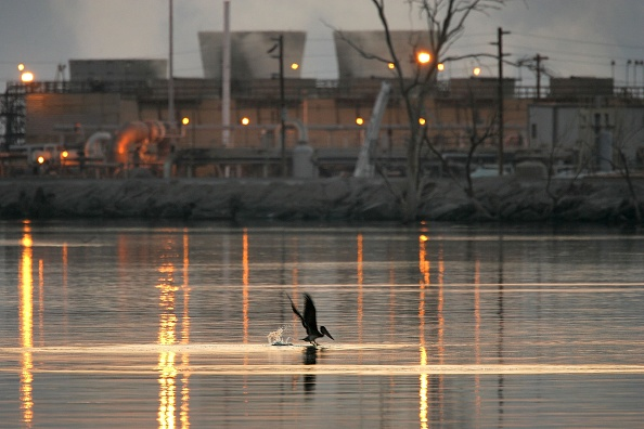 David McNew「Migratory Birds Expected To Bring Avian Flu To West Coast」:写真・画像(4)[壁紙.com]