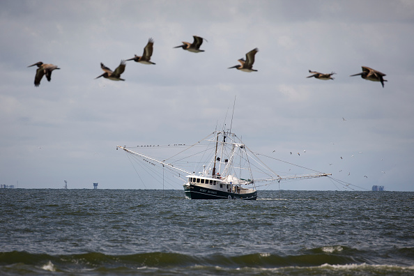 Fishing Boat「Combination Of Rising Sea Levels And Subsiding Land Endanger Louisiana Coast」:写真・画像(13)[壁紙.com]