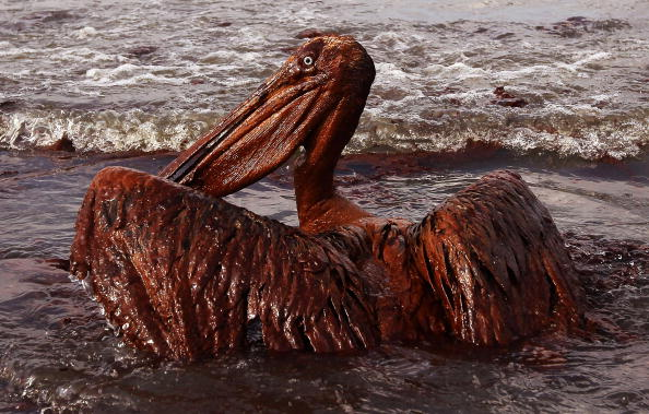 Win McNamee「Gulf Oil Spill Spreads, Damaging Economies, Nature, And Way Of Life」:写真・画像(8)[壁紙.com]