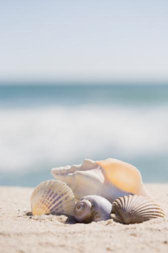 ビーチ「Beach shells」:スマホ壁紙(9)